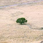 Symboliczne samotne drzewo na wysuszonym terenie